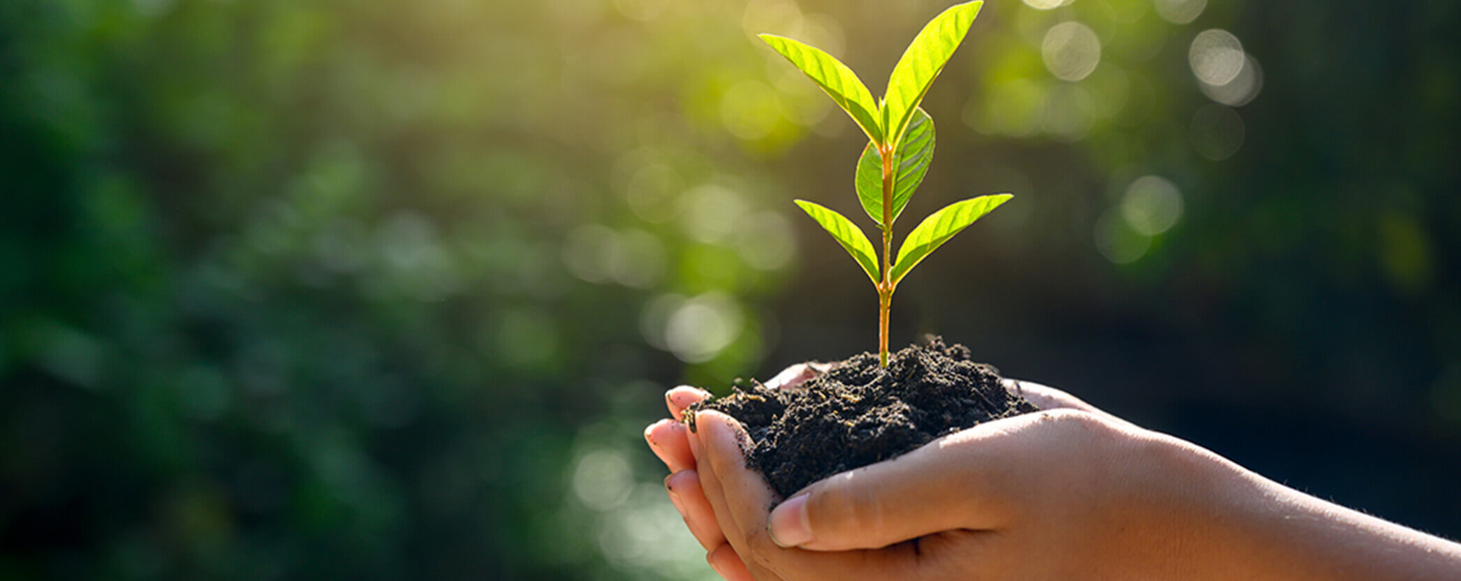 An hand holding a tree sapling in soil with sunshine.