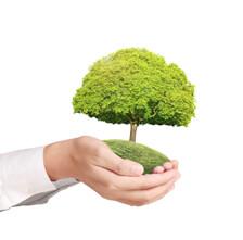 Holding_tree