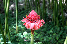 iStock_Colombian_Flower